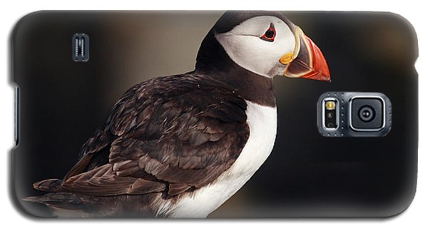 Puffin On Rock Galaxy S5 Case by Grant Glendinning