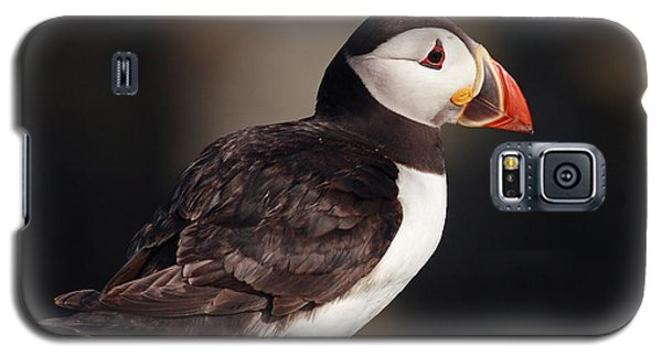 Puffin On Rock Galaxy S5 Case