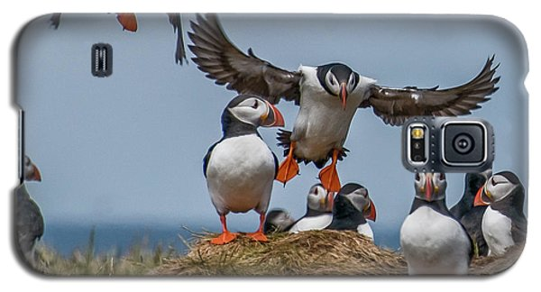 Puffins Galaxy S5 Case by Brian Tarr