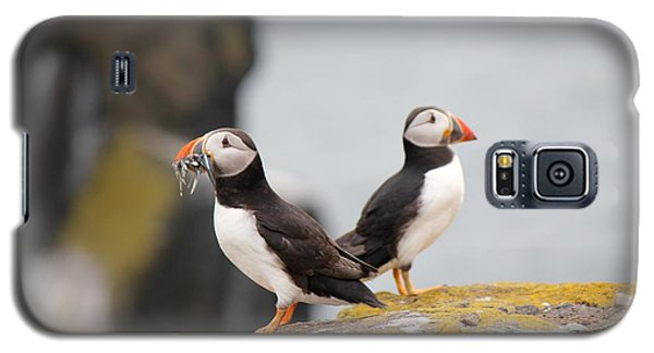 Galaxy S5 Case featuring the photograph Puffin's by David Grant