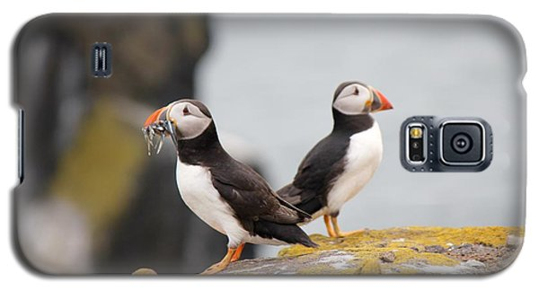 Puffin's Galaxy S5 Case