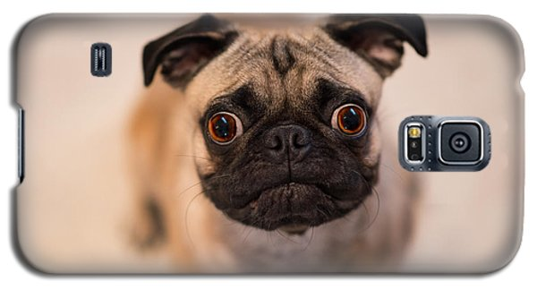 Galaxy S5 Case featuring the photograph Pug Dog by Laura Fasulo