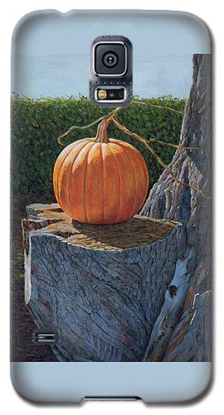 Pumpkin On A Dead Willow Galaxy S5 Case