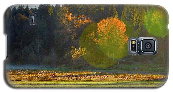 Pumpkin Sunset Galaxy S5 Case