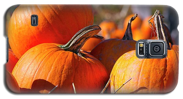 Galaxy S5 Case featuring the photograph Pumpkins 2 by Sharon Talson
