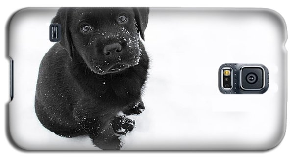 Puppy In The Snow Galaxy S5 Case