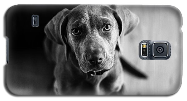 Puppy - Monochrome 1 Galaxy S5 Case