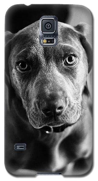 Puppy - Monochrome 1 Galaxy S5 Case