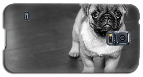 Puppy - Monochrome 2 Galaxy S5 Case