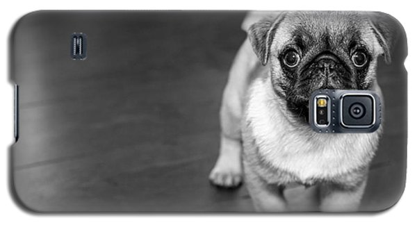 Puppy - Monochrome 2 Galaxy S5 Case