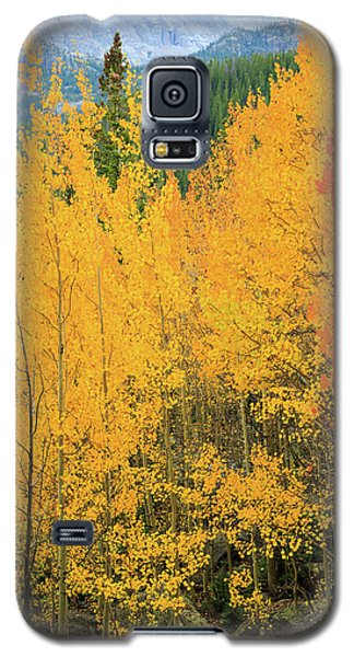 Pure Gold Galaxy S5 Case