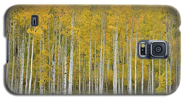 Purgatory Aspen Grove Galaxy S5 Case