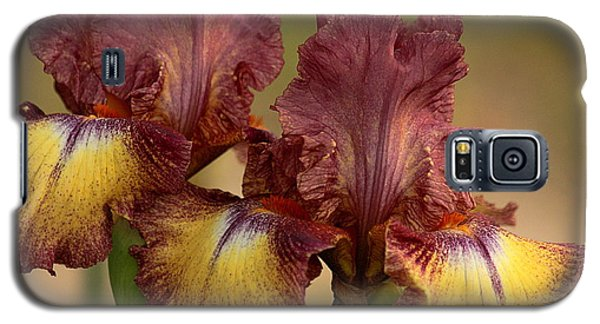 Purple And Yellow Bearded Iris Galaxy S5 Case by Sheila Brown