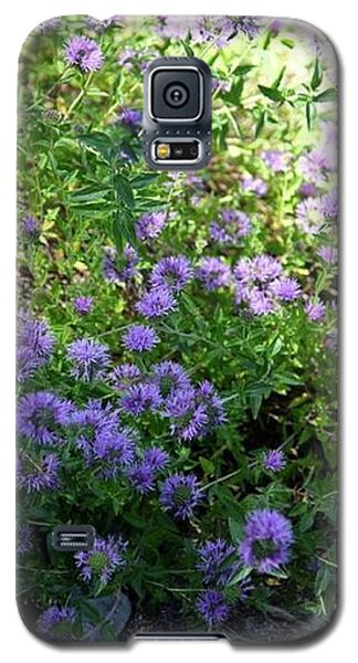 Purple Bachelor Button Flower Galaxy S5 Case