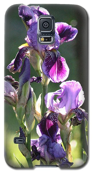 Purple Bearded Iris Galaxy S5 Case
