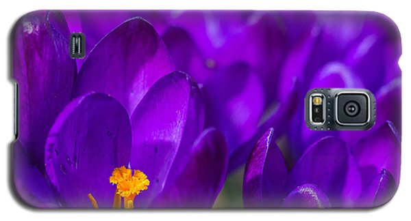 Purple Beauty Galaxy S5 Case