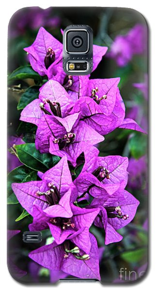 Galaxy S5 Case featuring the photograph Purple Bougainvillea by Robert Bales