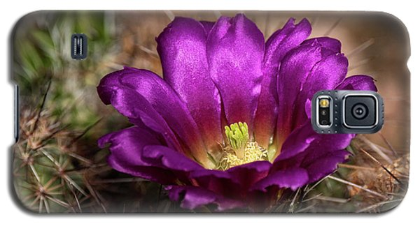 Galaxy S5 Case featuring the photograph Purple Cactus Flower  by Saija Lehtonen