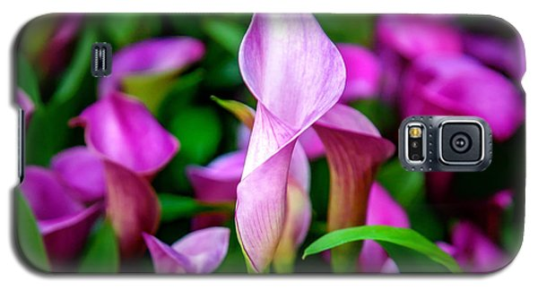 Featured Images Galaxy S5 Case - Purple Calla Lilies by Az Jackson