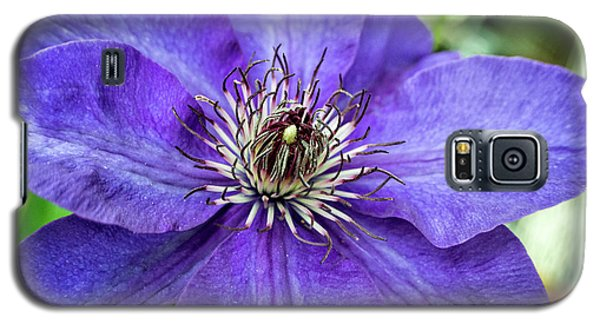 Galaxy S5 Case featuring the photograph Purple Clematis by Chrystal Mimbs