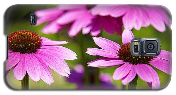 Purple Coneflowers Galaxy S5 Case