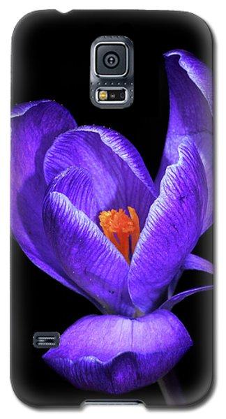 Purple Crocus Galaxy S5 Case