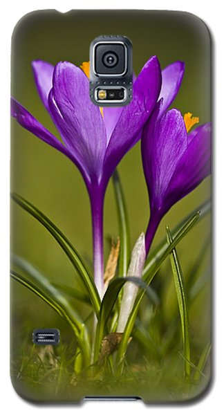 Galaxy S5 Case featuring the photograph Purple Crocus by Gabor Pozsgai