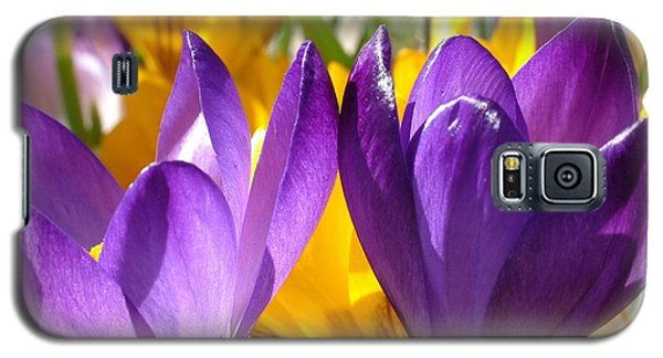Purple Crocuses Galaxy S5 Case