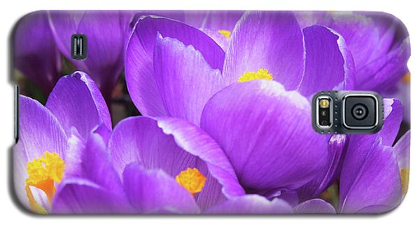 Purple Crocuses Galaxy S5 Case