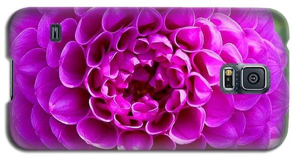 Purple Dahlia Galaxy S5 Case