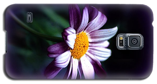 Galaxy S5 Case featuring the photograph Purple Daisy Flower by Susanne Van Hulst