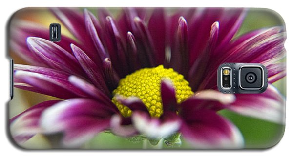 Purple Daisy Galaxy S5 Case