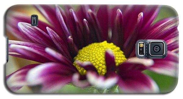 Purple Daisy Galaxy S5 Case