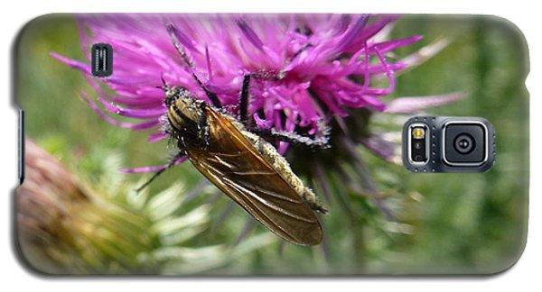 Purple Dandelions 1 Galaxy S5 Case