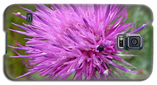 Purple Dandelions 2 Galaxy S5 Case by Jean Bernard Roussilhe