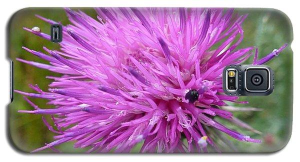 Purple Dandelions 2 Galaxy S5 Case