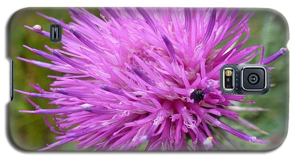 Purple Dandelions 2 Galaxy S5 Case