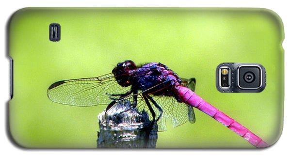 Purple Dragon Galaxy S5 Case by Terri Mills