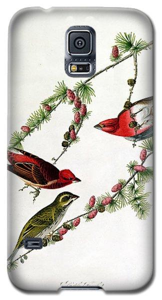 Finch Galaxy S5 Case - Purple Finch by John James Audubon