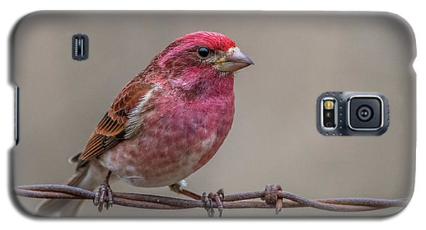 Galaxy S5 Case featuring the photograph Purple Finch On Barbwire by Paul Freidlund