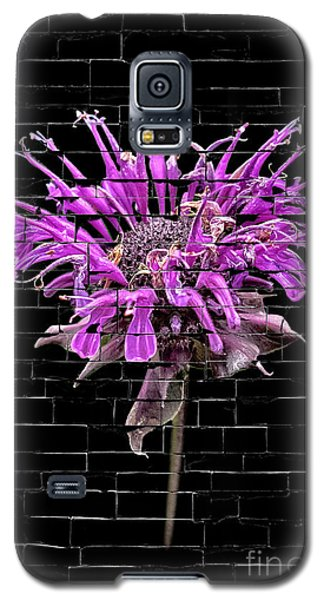 Galaxy S5 Case featuring the photograph Purple Flower Under Bricks by Walt Foegelle