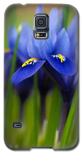 Purple Flowers Galaxy S5 Case by Catherine Lau