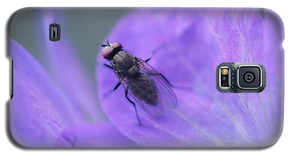 Purple Fly Galaxy S5 Case