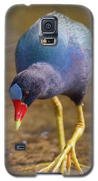 Purple Gallinule Bigfoot Galaxy S5 Case