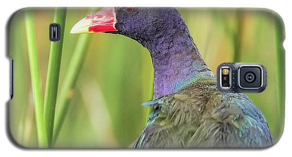 Purple Gallinule Galaxy S5 Case
