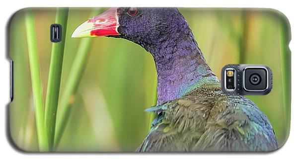 Purple Gallinule Galaxy S5 Case