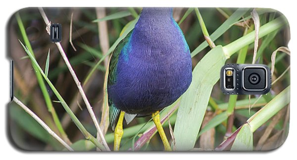Galaxy S5 Case featuring the photograph Purple Gallinule by Robert Frederick
