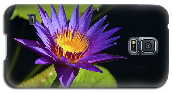 Galaxy S5 Case featuring the photograph Purple Gold by Steve Stuller