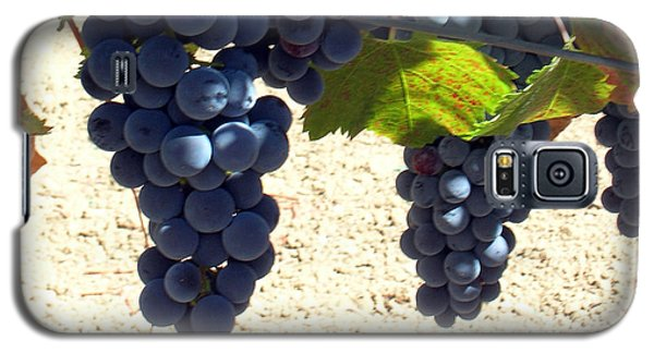 Galaxy S5 Case featuring the photograph Purple Grapes On Vine by Bonnie Muir