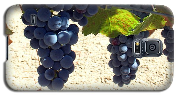Purple Grapes On Vine Galaxy S5 Case by Bonnie Muir